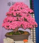 Bonsai en flor