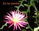 Magníficas flores