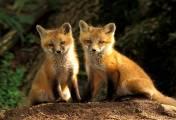 Animales del bosque y alrededores