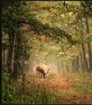 El Silencio en los bosques - belleza y reflexión