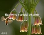 Esa forma especial del amor