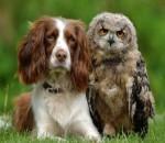 Animales tolerantes y tiernos